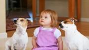 Köpeklerle Bebeklerin Özel Dünyası!