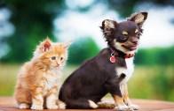 Komik Hayvanlar Tam Gaz!