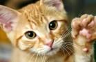 Sahibinin Ölü Numarasına Üzülen Kedi