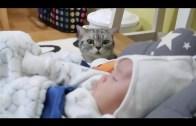 İlk Defa Bebek Gören Meraklı Kediler