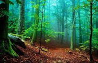 Dünyanın En İlginç Görüntüsü! İnsan Gibi Nefes Alan Orman