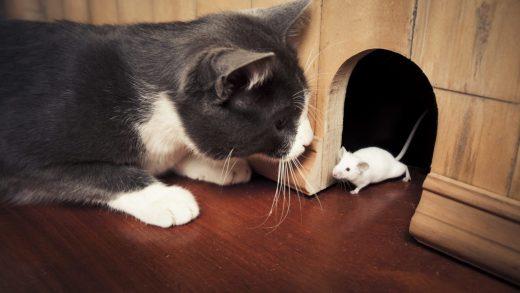 Bursa'da kedi ile farenin dostluğu görenleri şaşırttı. Kedi ve farenin birlikteliği görenleri hayrete düşürdü. Kedi ile farenin dostluğu video izle.