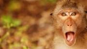 surprised-monkey-1280×720