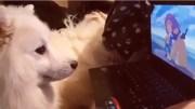 Kedi Köpekler Aslan Kral Filmine Tepkileri