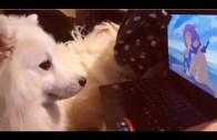 Alarmı Kapatarak Kadının İşine Geç Kalmasına Neden Olan Kedi