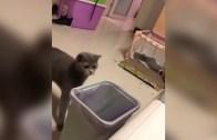 Yavrusunu Çöpe Atan Kedi