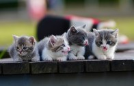 Kedilerin Viral Olmuş Halleri