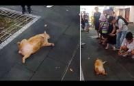 Ölü Takliti Yaparak İnsanları Trolleyen Kedi