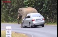 Arabanın Üzerine Oturan Fil Korku Dolu Anlar Yaşattı