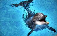 Turist Teknesinin Dalgaları Arasında Çocuklar Gibi Eğlenen Yunus