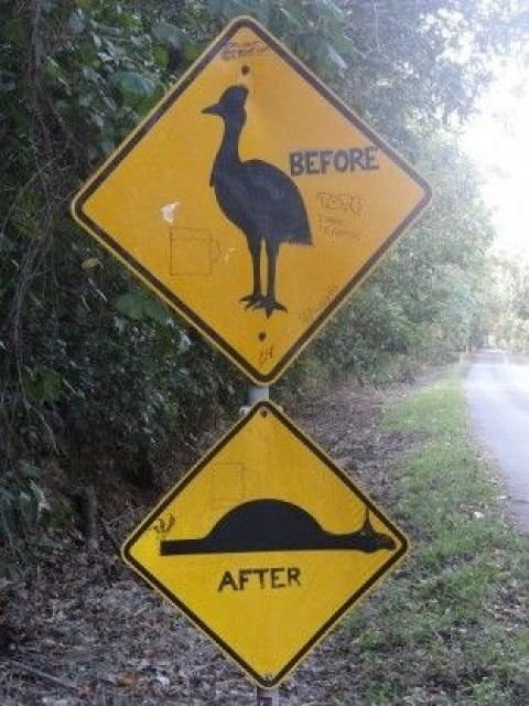 Australie- Cap Tribulation: Ahh l'un des panneaux les plus connus d'Australie: Avant/ Apres!!!