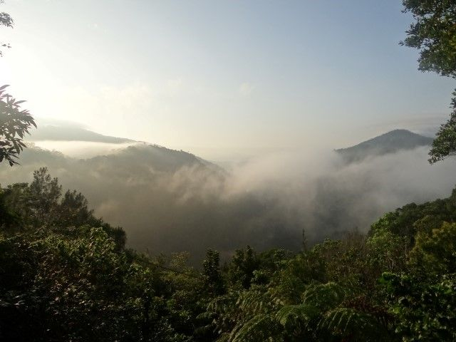 Australie- Queensland: Levé du solel à Kuranda.