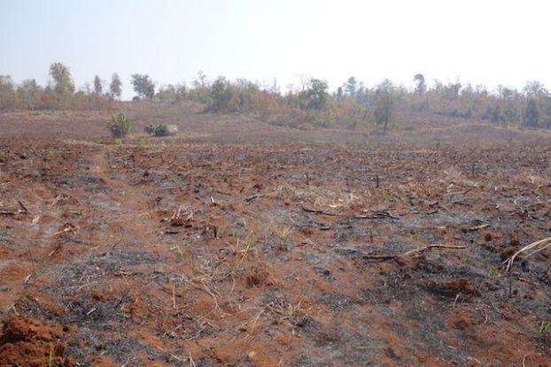 champs brulé du coté de hsipaw photo blog voyage tour du monde http://yoytourdumonde.fr