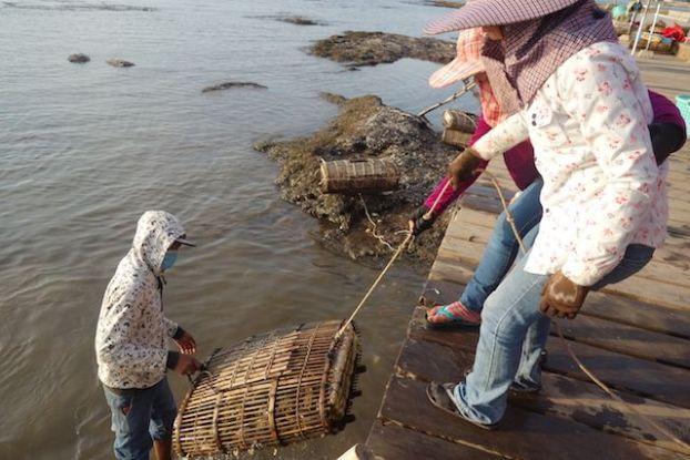 Le crabe bleu est à decouvrir à kep. Les locaux vont chercher les casiers. Article complet sur http://yoytourdumonde.fr