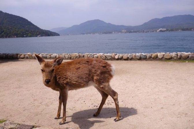 Miyajima Sambashimae Parc photo blog voyage tour du monde http://yoytourdumonde.fr