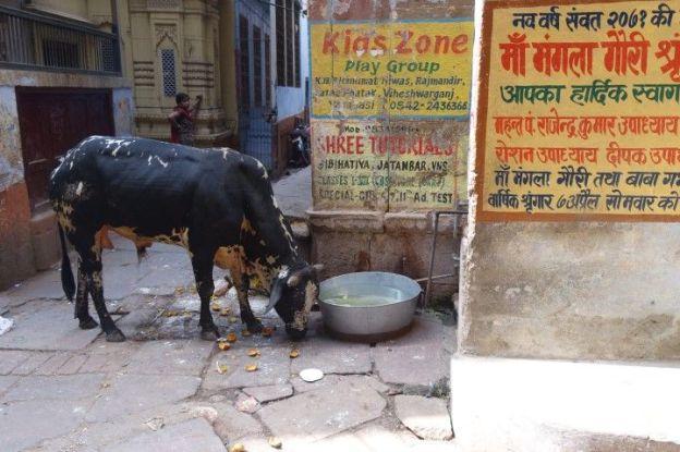 Ville sainte, Gange saint, et bien sur vache sainte. Viva India! Photo blog voyage tour du monde http://yoytourdumonde.fr