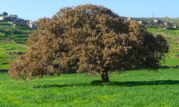 Το ξεχασμένο δάσος της βελανιδιάς