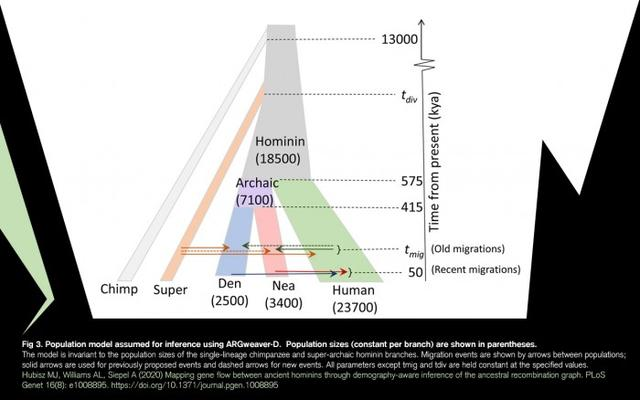 New analysis shows DNA from unidentified ancient human ancestors was passed on to modern humans