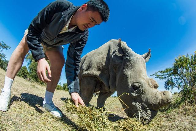 """Can ordinary people play the NBA? You will understand after reading these photos that Yao Ming""""turned"""" a rhino into a big dog"""