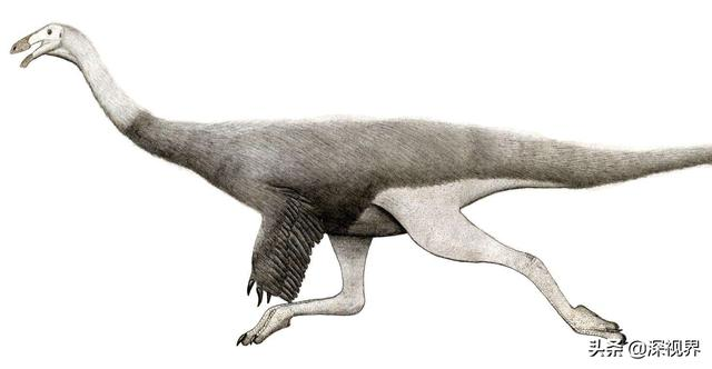 """Not all dinosaurs have died out, some of them are""""reclusive"""" in the present species"""