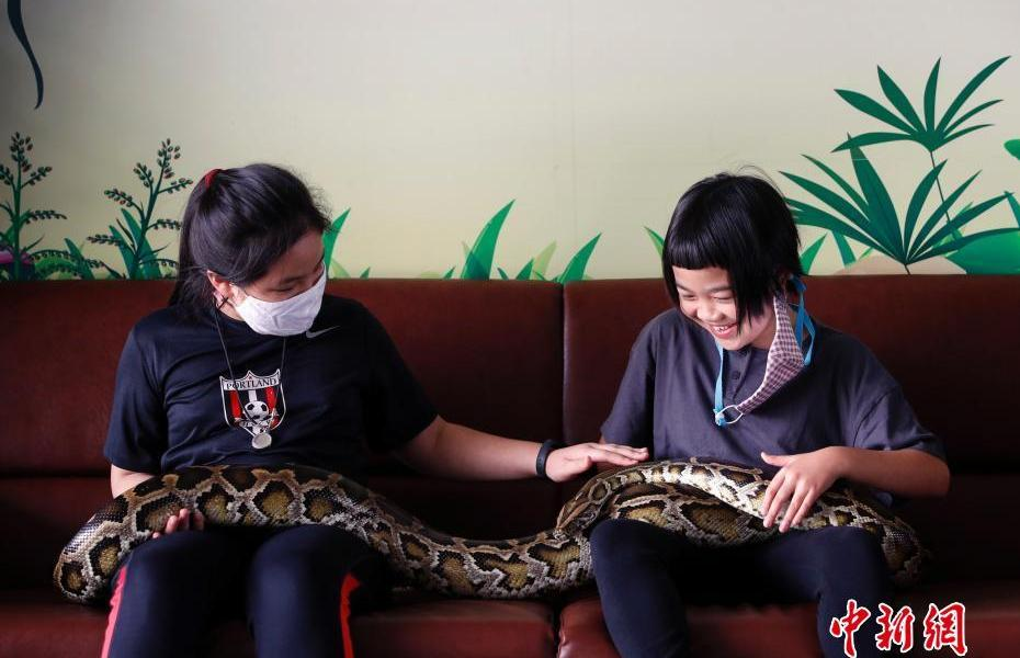 """""""Snake Cafe"""" reappears in Bangkok, Thailand. Do you dare to touch real snakes?"""