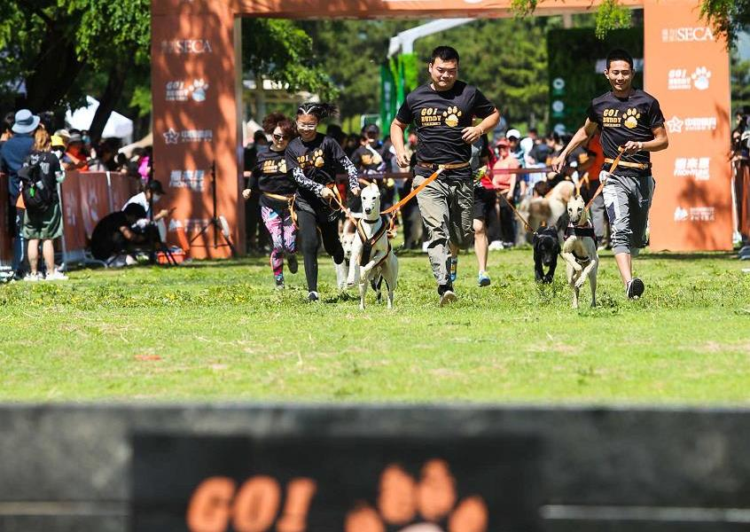Humans and dogs cooperate in the obstacle course! The first stop of Buddy Warriors Tournament landed in Beijing