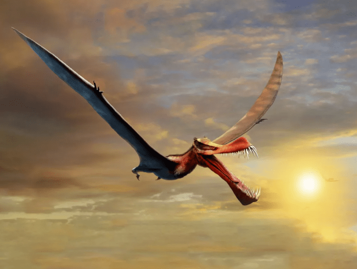 Scientists are studying the newly discovered pterosaur fossils in Australia