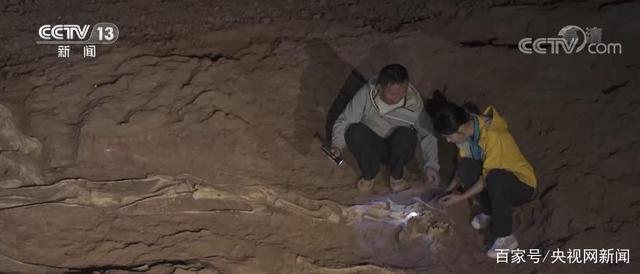 """The mystery of """"Lufeng dinosaur head to the East"""" is analyzed by experts"""