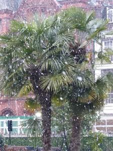 Palms in the snow in Soho Square
