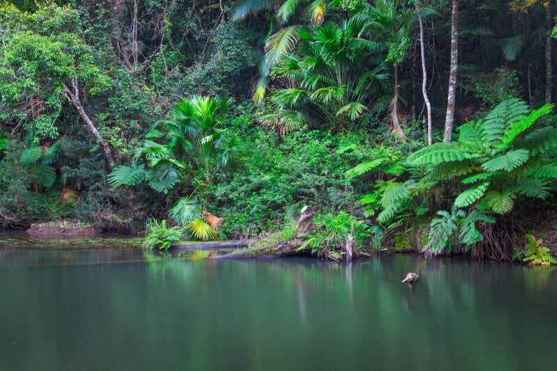 Broken River in Eungella National Park, Queensland, Australia
