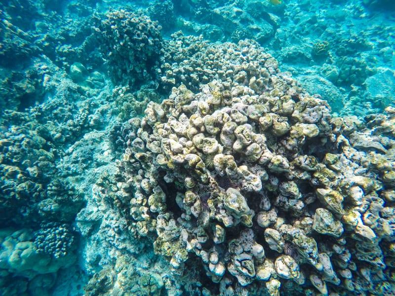 Snorkeling at Kealakekua Bay on the Big Island of Hawaii