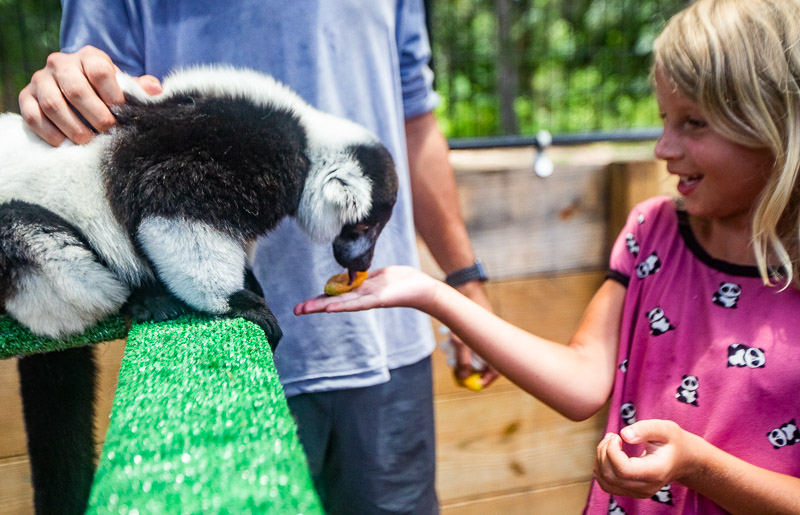 Meeting the lemurs at the North Florida Wildlife Center
