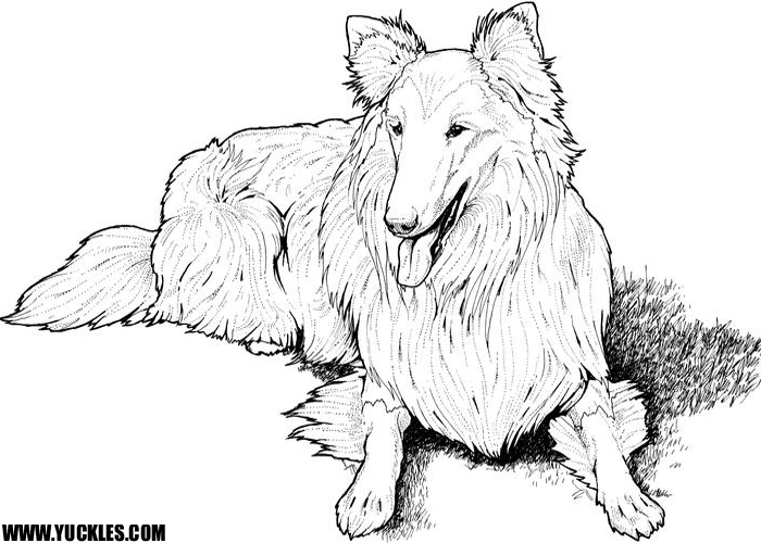 dog coloring pages by yuckles