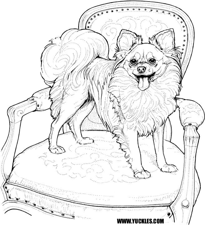 Pomeranian Coloring Page