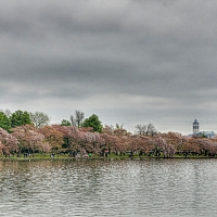 View-of-the-Washington-Monument-from-the-Tidal-Basin
