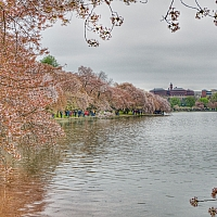 The-Tidal-Basin