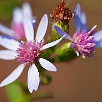 Tiny-flowers