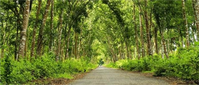 Hasil gambar untuk taman nasional alas purwo