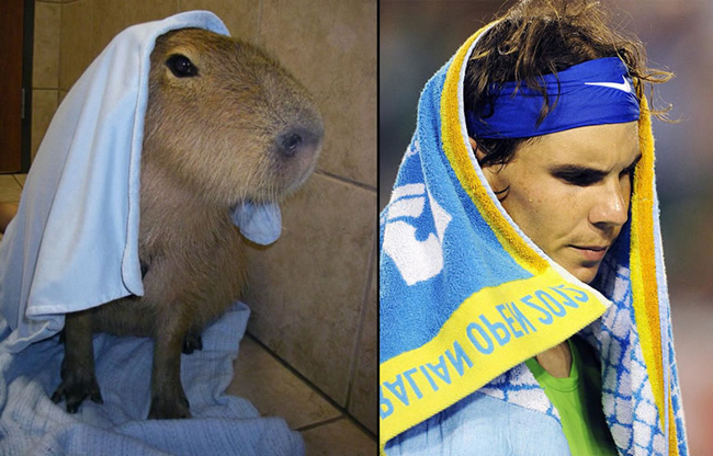 capybarasthatlook