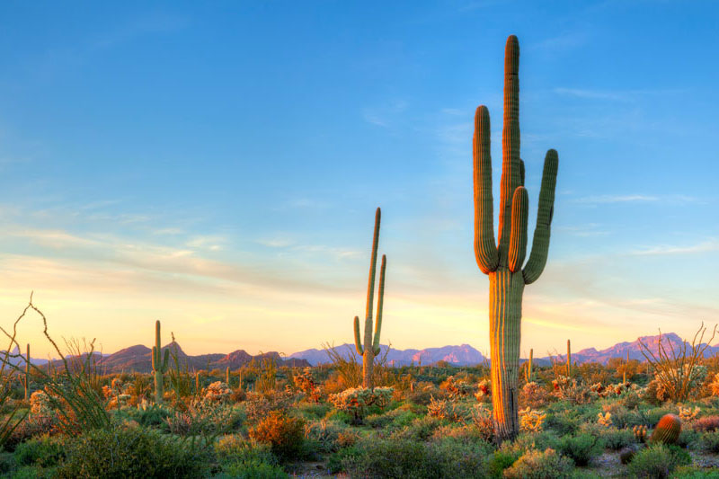 a couple of very tall cacti dominate the barren landscape