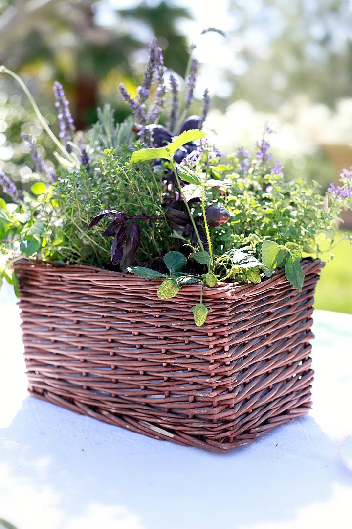 Diy Kitchen Herb Garden Giveaway Yummy Mummy Kitchen