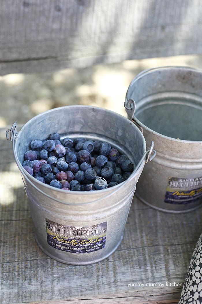 Fresh Picked Blueberries for Blueberry Crisp