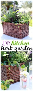 How to make a beautiful kitchen herb garden in a basket. Perfect for a teacher appreciation or Mother's Day gift!