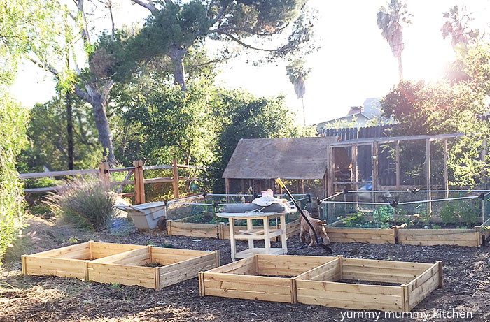how to grow vegetables in raised beds