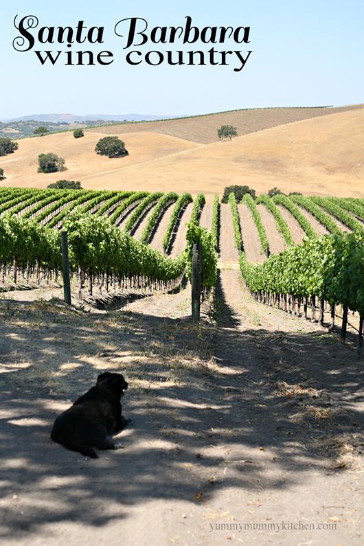 A beautiful vineyard in Santa Ynez, CA.