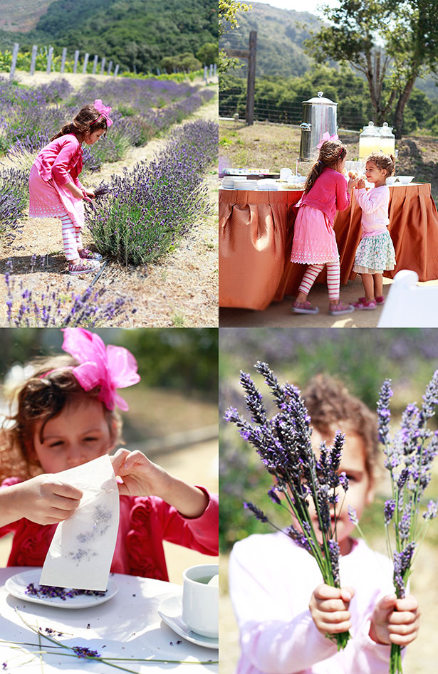 4 photos of children picking lavender in a field and making lavender tea.