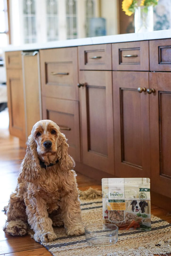 An English Cocker Spaniel sits in a kitchen next to a bag of Freshpet natural dog food.