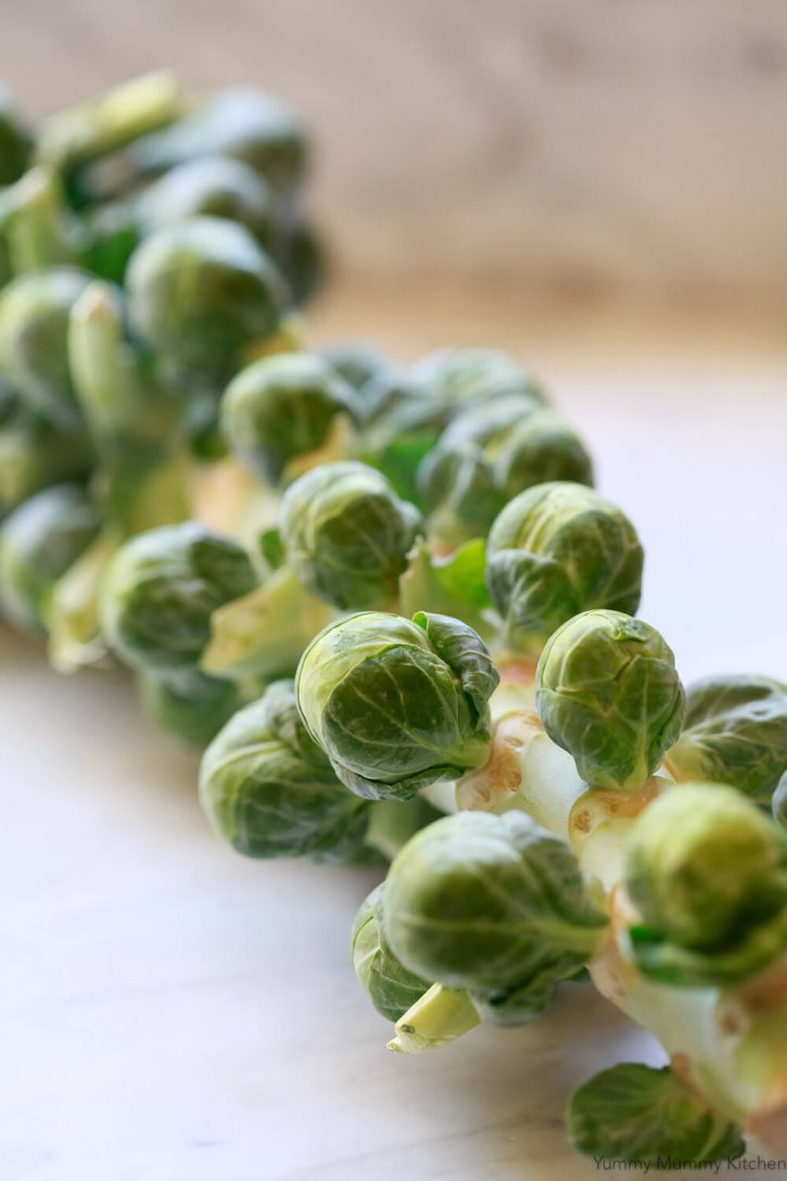 A stalk of Brussels sprouts.