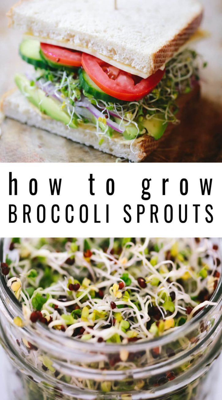 "A photo of a sandwich vegetable sandwich with sprouts on top and a close-up of broccoli sprouts on the bottom. Text overlay reads, ""how to grow broccoli sprouts."""
