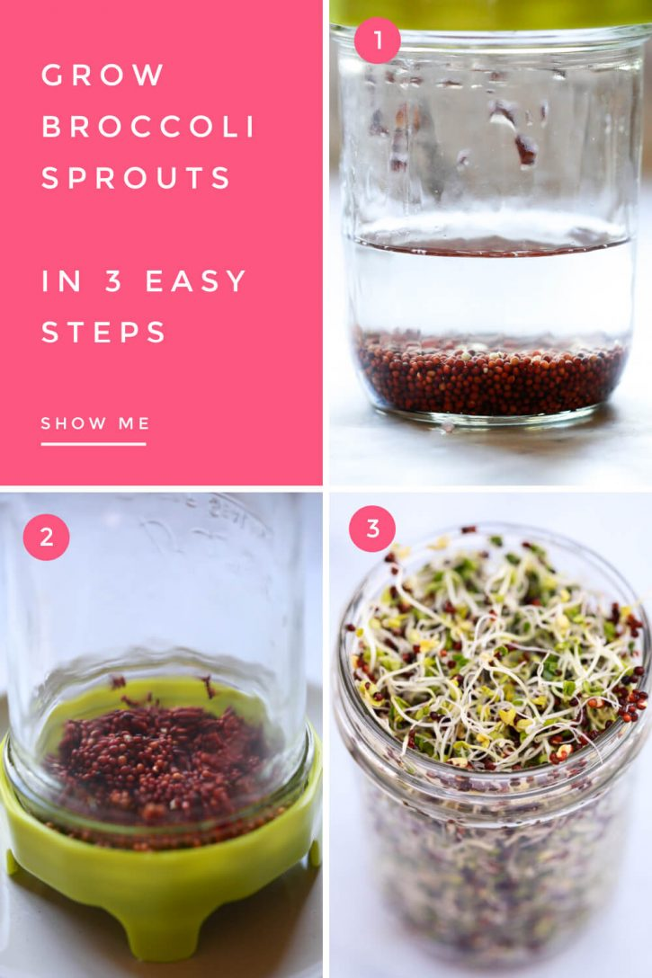 Step by step photos of how to grow broccoli sprouts, from soaking in water, to draining, to sprouting.